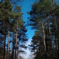 Весенний лес. :: Артур Ходос