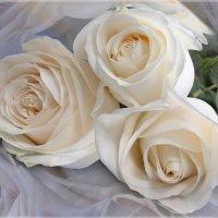 Белые розы :: Эля Юрасова
