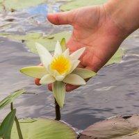 Цветок в руке :: Юрий Стародубцев