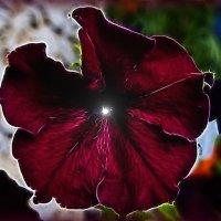 Цветочные фантазии :: Любовь Чунарёва