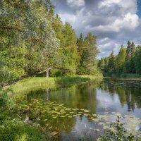 Старый пруд :: Olga subbotina