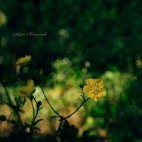 Цветик. :: Жемчужникова Марина
