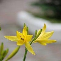 Цветочный хоровод-339. :: Руслан Грицунь