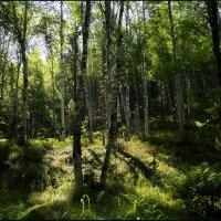 В лесу :: Любовь Чунарёва