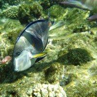 Рыбы :: Анатолий