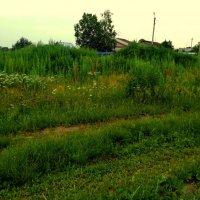 Трава, окраина, сумерки... :: Милла Корн