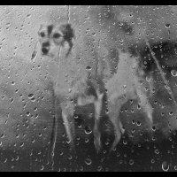 про собаку :: Алексей Карташев