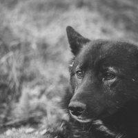Одиночество :: Евгений Шевелев