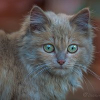 Кошик :: Фотостудия Объективность