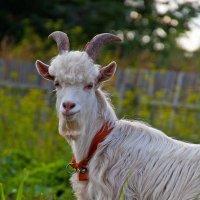 Для людей он козёл, для козочек -Есенин...)) :: Владимир Хиль