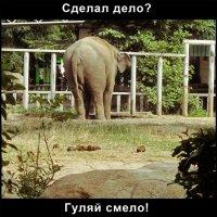Слон :: Сергей Иванов