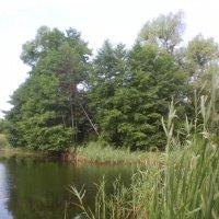Возле озера :: Сергей Гвоздев