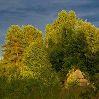 домик в лесу :: Сергей Цымбалов