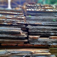 Неуемная жажда......ЖИТЬ!!!! Дерево...если  даже его срубили ,и распилили стремится возродиться!!! :: Людмила Богданова (Скачко)