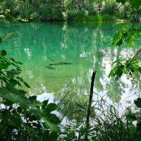 Ловись рыбка большая....))) :: Galina Dzubina
