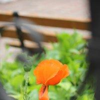 Цветочный хоровод-354. :: Руслан Грицунь