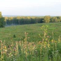 Сибирские травы :: Андрей Беспалов