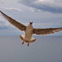 Почти орел :: Александр Бойко