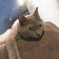 Грустный кот :: diamant Татьяна Головина