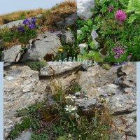простые горные цветы :: Elena Wymann