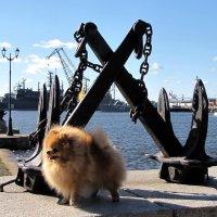 Солёный пёсик :: Николай