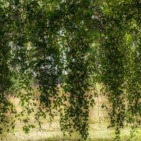 Висячие сады :: Сергей Цымбалов