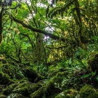 Древний лес :: Александр Хорошилов