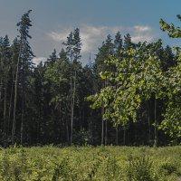 Опушка. :: Яков Реймер