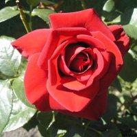 Цветочный хоровод-358. :: Руслан Грицунь