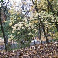 Золото Бабьего лета Кисловодского Лечебного Парка :: Евгений БРИГ и невич