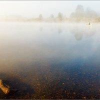 Туманно-подводно-речной пейзаж... :: Александр Никитинский