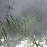 Туман на озере :: Ната Волга