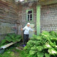 Дом, покрытый осиновой дранкой :: Svetlana27