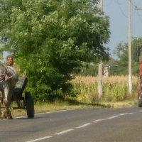 Встреча на дороге... :: Юлия Бабитко