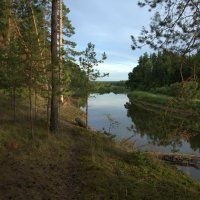 Русский лес :: Елена Разумилова