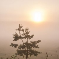 Туманное утро :: Светлана Шишова