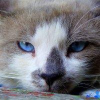 Эти глаза напротив... :: Александр Прокудин
