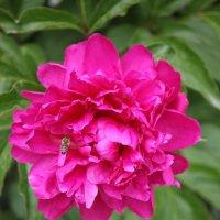 Цветочный хоровод-365. :: Руслан Грицунь