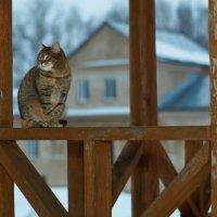 Монастырский кот :: Дмитрий Ф