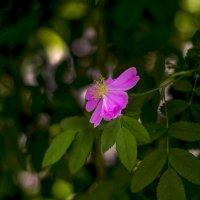почти роза :: gribushko грибушко Николай