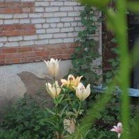 Цветы у дома. :: Sergey Serebrykov