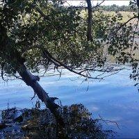 Днепр в просветах деревьев :: Нина Корешкова