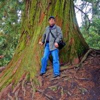 деревья острова Майнау :: Александр Корчемный