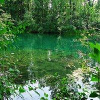 Тишайший аквариум, дивное лето... :: Galina Dzubina