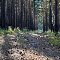 Лес у Анагары, Иркутская область :: Яна Васильева