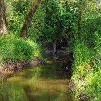 Лесной ручей. :: Александр Атаулин