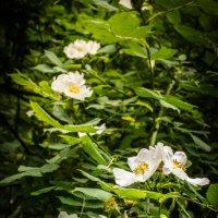 цветы :: Анастасия Жидкова