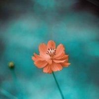 muhteşem doğa :: Selman Şentürk