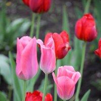 Цветочный хоровод-366. :: Руслан Грицунь