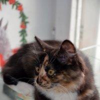 Кошка Аська :: Николай Смирнов